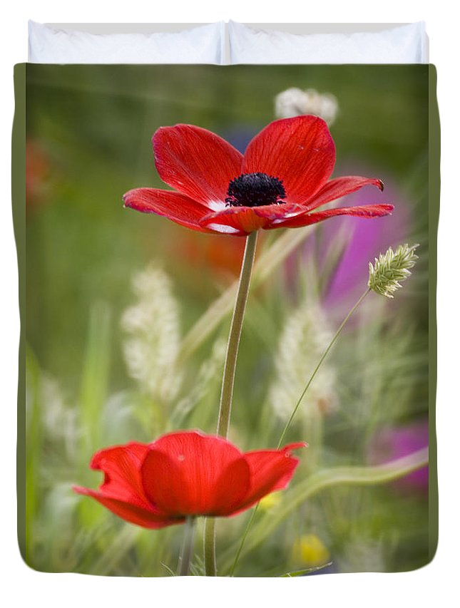 Red Duvet Cover featuring the photograph Red Anemone Coronaria In Nature by Ofer Zilberstein