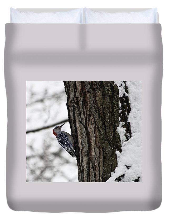 Woodpecker Duvet Cover featuring the photograph Red Bellied Woodpecker No 1 by Teresa Mucha