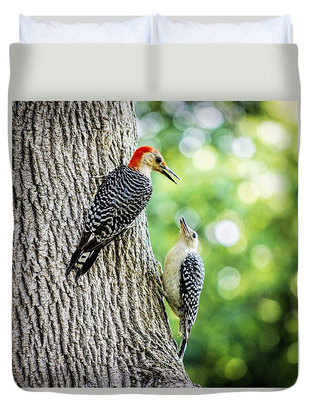 Red-bellied Woodpeckers Duvet Cover featuring the photograph Red-bellied Woodpeckers by David Stone