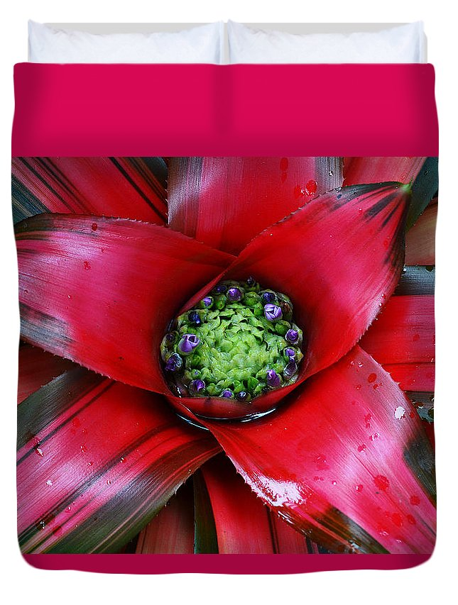 Cactus Duvet Cover featuring the photograph Red Bloom by Elizabeth Palmer