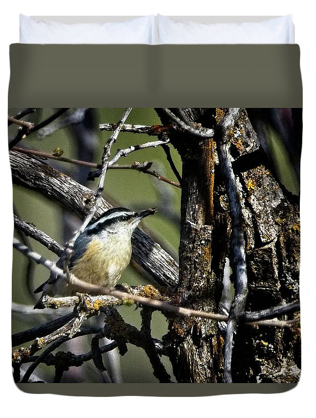 Bird Duvet Cover featuring the photograph Red-breasted Nuthatch by Rick Graham