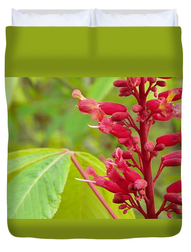 Flower Duvet Cover featuring the photograph Red Buckeye by Christopher Burns