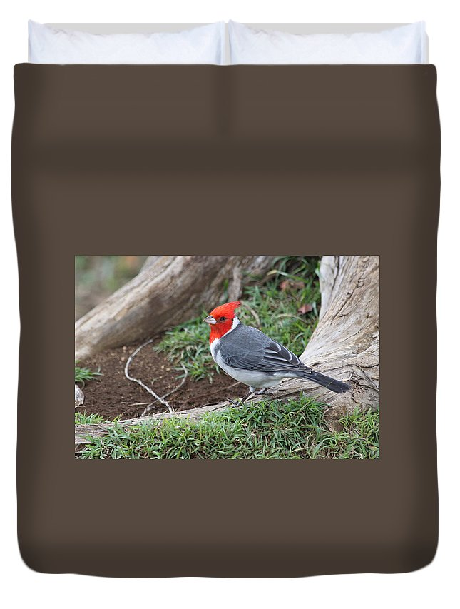 Red Crested Cardinal Duvet Cover featuring the photograph Red Crested Cardinal Male by Lauri Novak