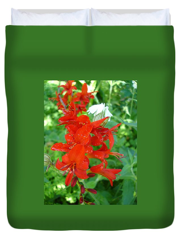 Flora Duvet Cover featuring the photograph Red Crocosmia Lucifer by Susan Baker