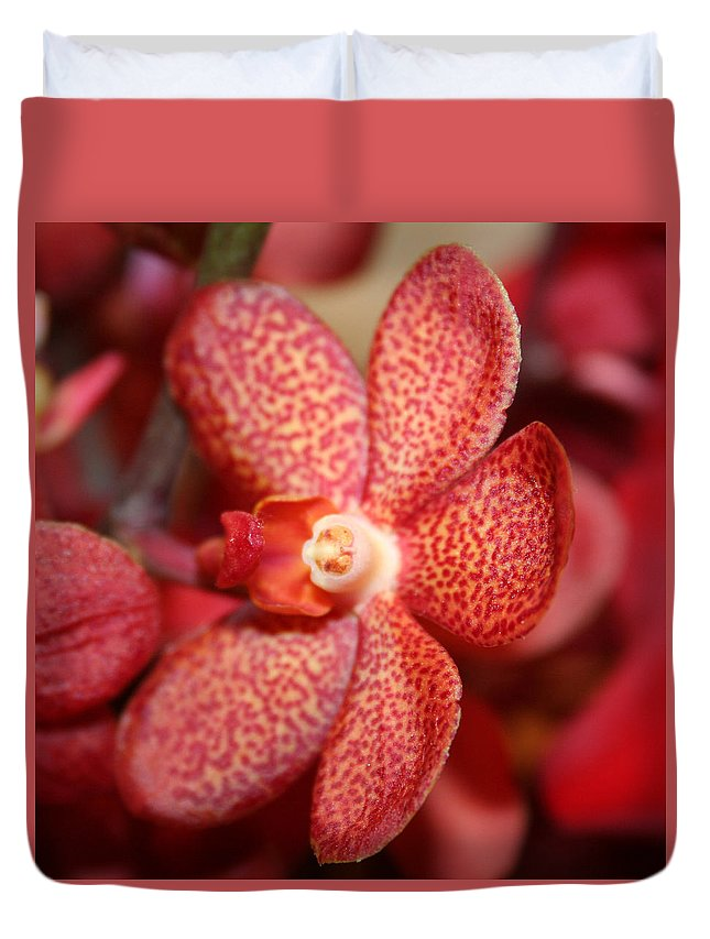 Flowers Macro Nature Digital Photograph Red Vibrant White Duvet Cover featuring the photograph Red Dots by Linda Sannuti