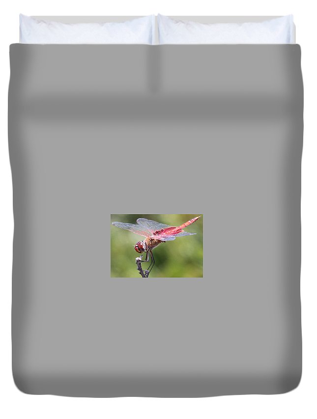 Insect Duvet Cover featuring the photograph Red Dragonfly 1 by Gary Canant