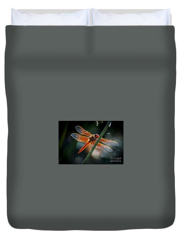 Insects Duvet Cover featuring the photograph Red Dragonfly On Reed by Rich Governali