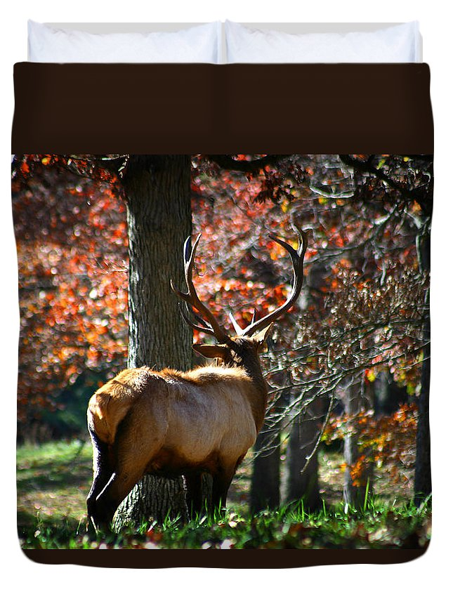 Elk Duvet Cover featuring the photograph Red Elk by Anthony Jones