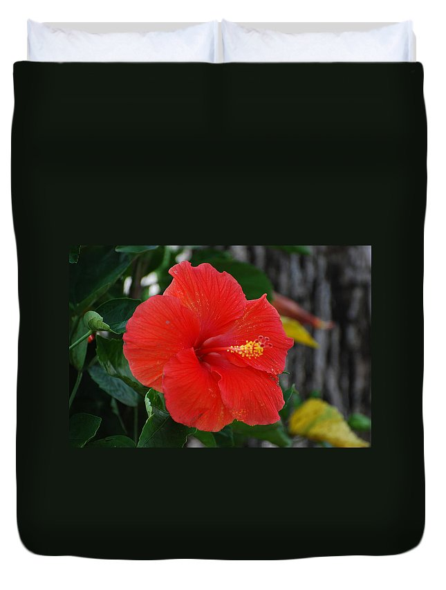Flowers Duvet Cover featuring the photograph Red Flower by Rob Hans