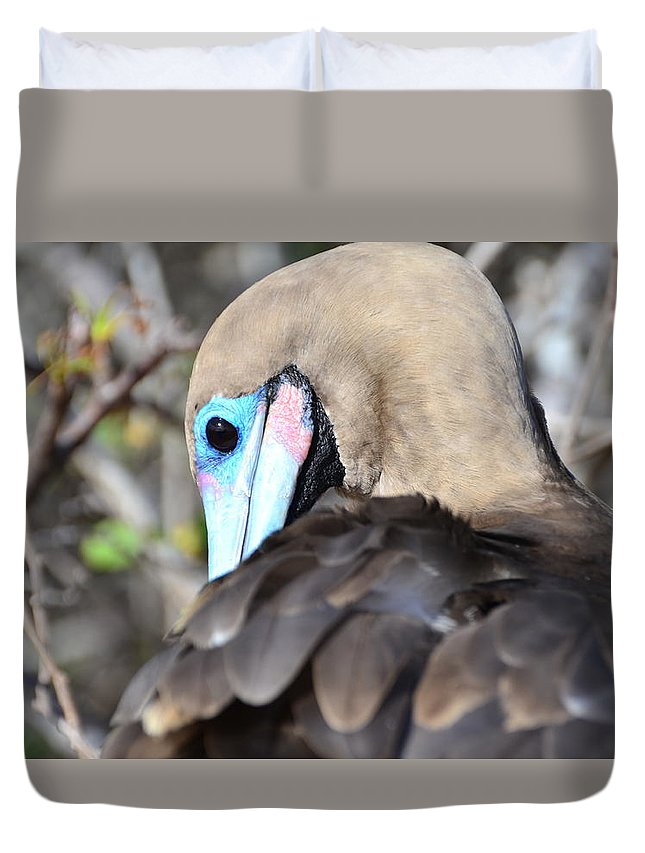 Galapagos Duvet Cover featuring the photograph Red Footed Booby by Harry Coburn