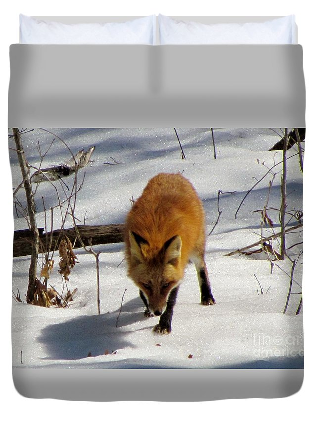 Red Fox Small Mammal Duvet Cover featuring the photograph Red Fox 2 by James Seitzinger