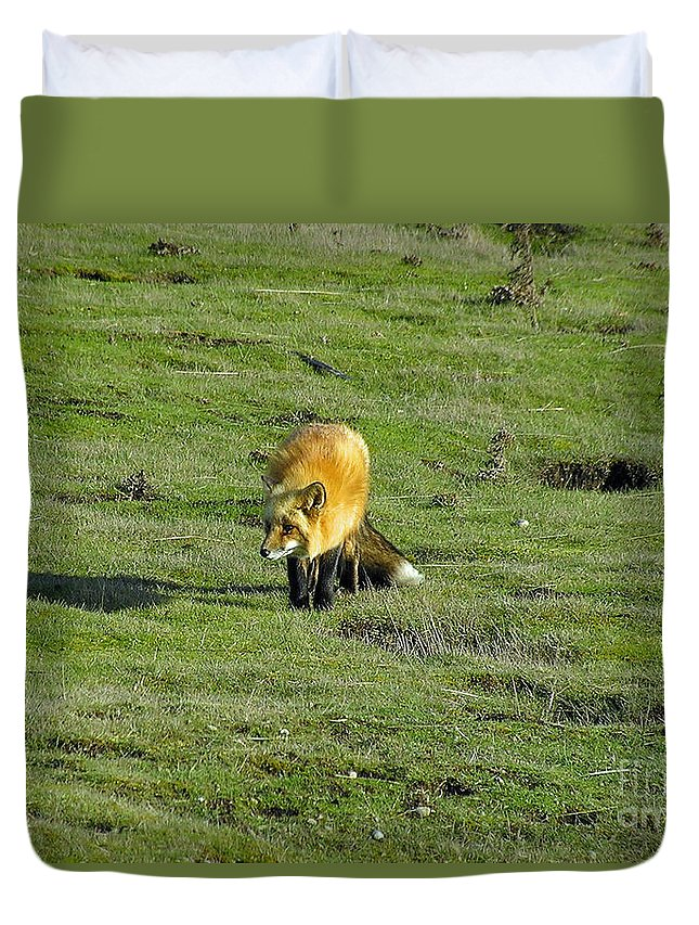 Fox Duvet Cover featuring the photograph Red Fox by Louise Magno
