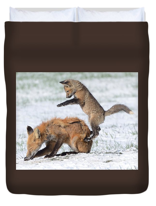 Animal Duvet Cover featuring the photograph Red Fox Pounce by Robert Buderman