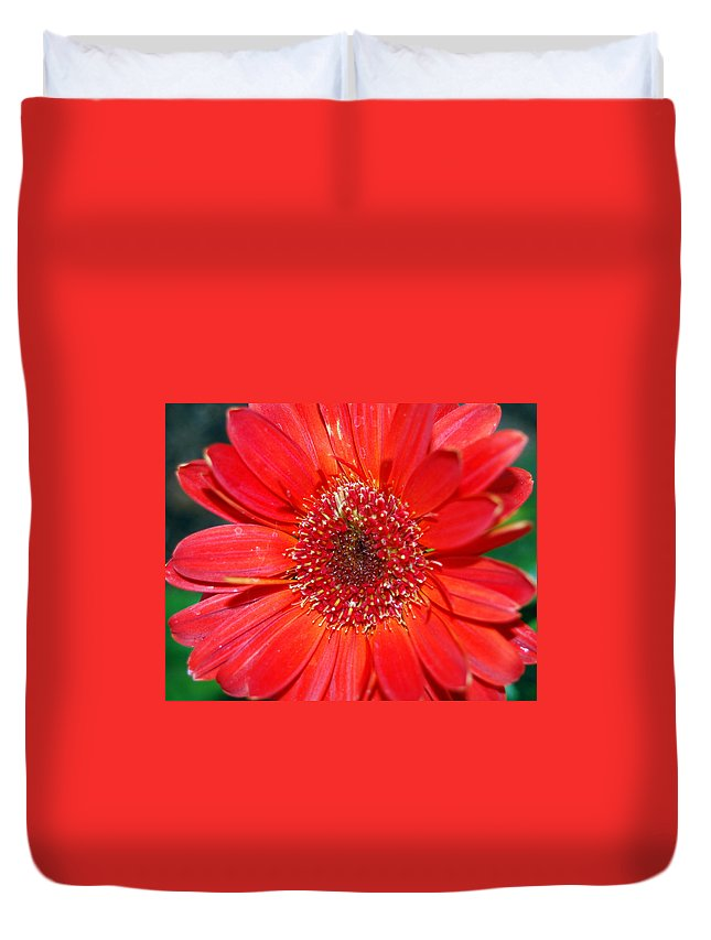 Gerber Duvet Cover featuring the photograph Red Gerber Daisy by Amy Fose