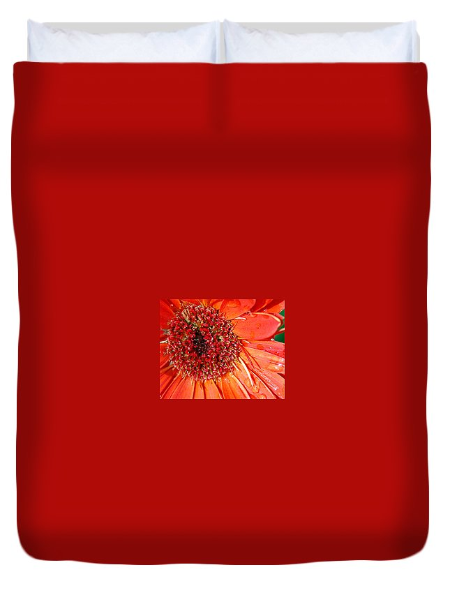 Gerber Daisy Duvet Cover featuring the photograph Red Gerbera Daisy by Amy Fose