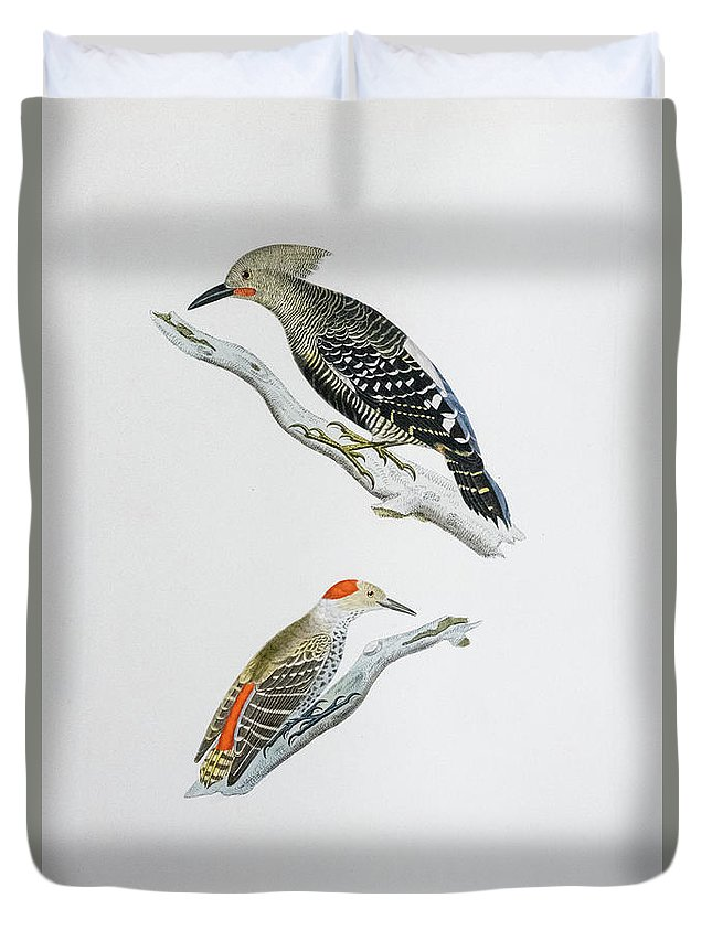 Woodpecker Duvet Cover featuring the painting Red Headed Woodpeckers 3 by Douglas Barnett