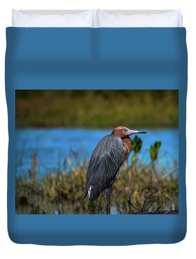 Red Heron Duvet Cover featuring the photograph Red Heron by Kelly Kennon