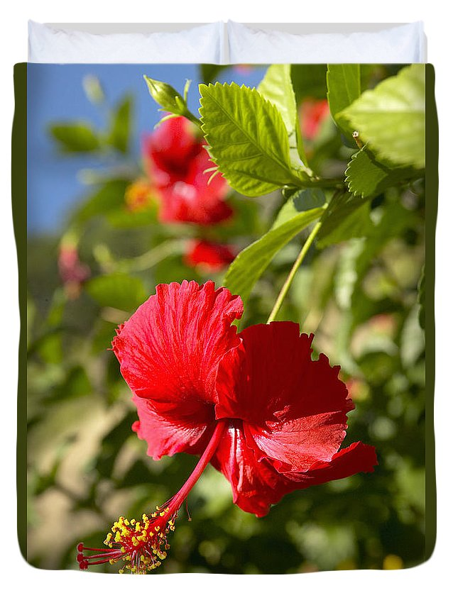 Above Duvet Cover featuring the photograph Red Hibiscus by Kyle Rothenborg - Printscapes
