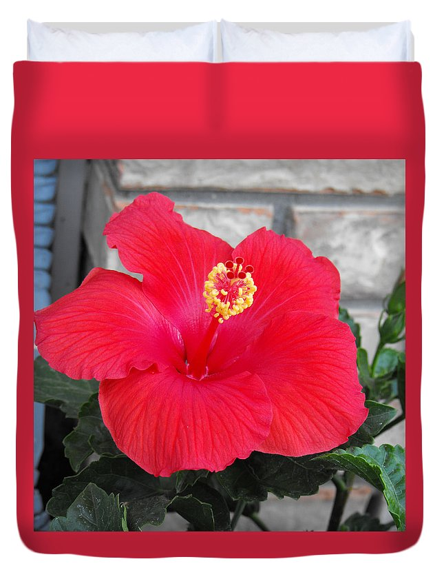 Photography Duvet Cover featuring the photograph Red Hibiscus by Ruth Palmer