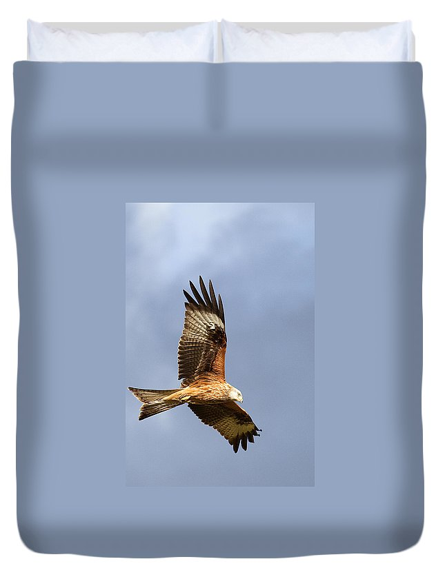 Red Kite Duvet Cover featuring the photograph Red Kite Flying by Bob Kemp