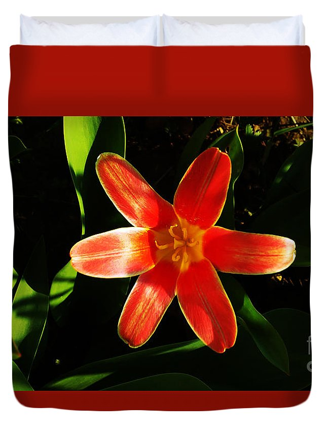 Tulip Duvet Cover featuring the photograph Red Laughing At Me by Jasna Dragun