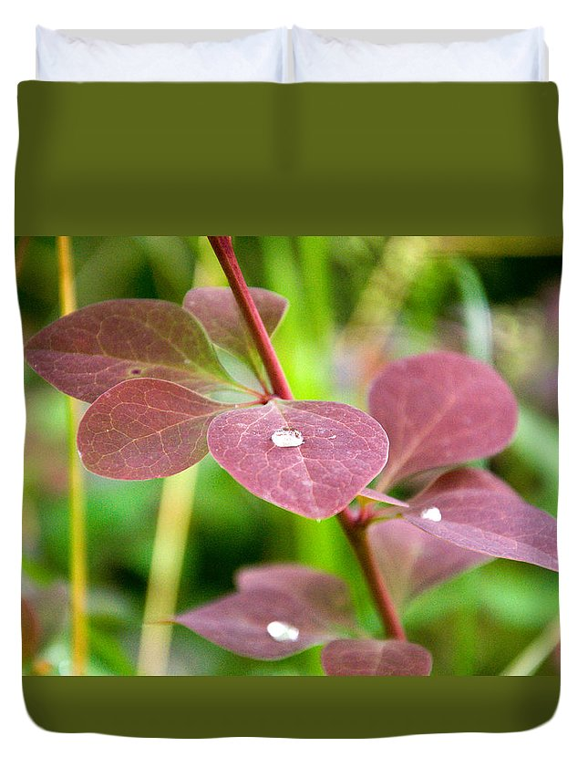 Nature Duvet Cover featuring the photograph Red Leaves Plant by Freepassenger By Ozzy CG