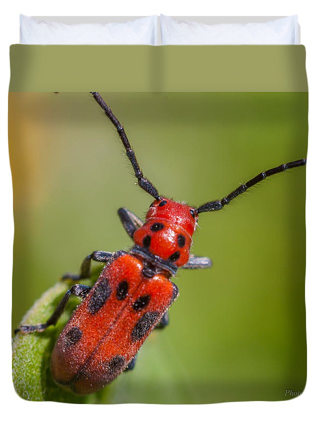 Macro Duvet Cover featuring the photograph Red Milkweed Beetle by Quenel Jiang