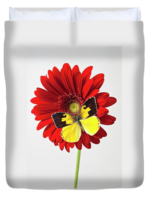 Red Mum Dogface Butterfly Chrysanthemums Duvet Cover featuring the photograph Red Mum With Dogface Butterfly by Garry Gay