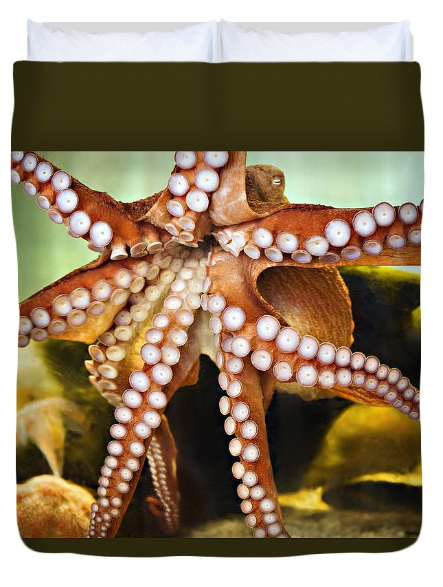 Aquarium Duvet Cover featuring the photograph Red Octopus by Marilyn Hunt