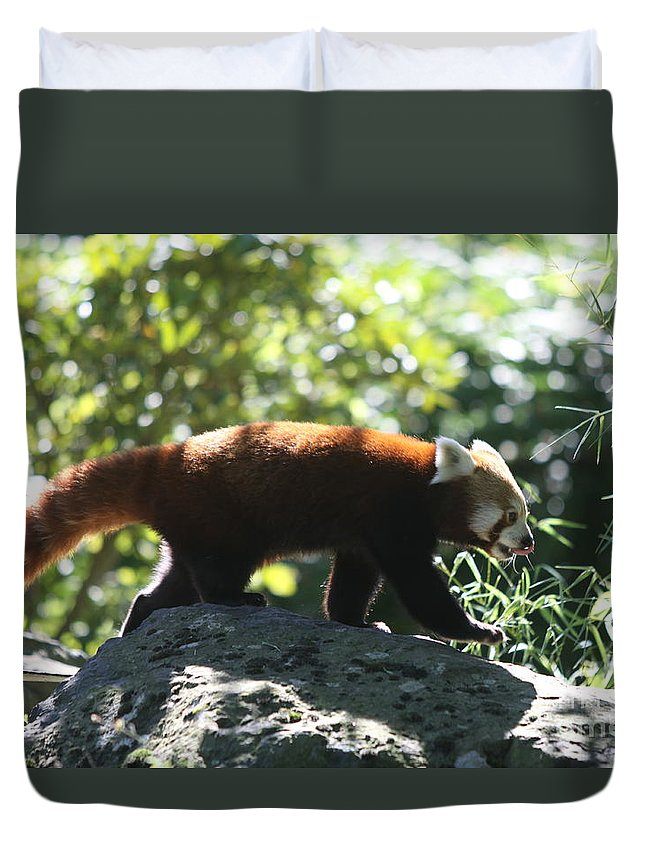 Panda Duvet Cover featuring the photograph Red Panda In A Tree by Christiane Schulze Art And Photography