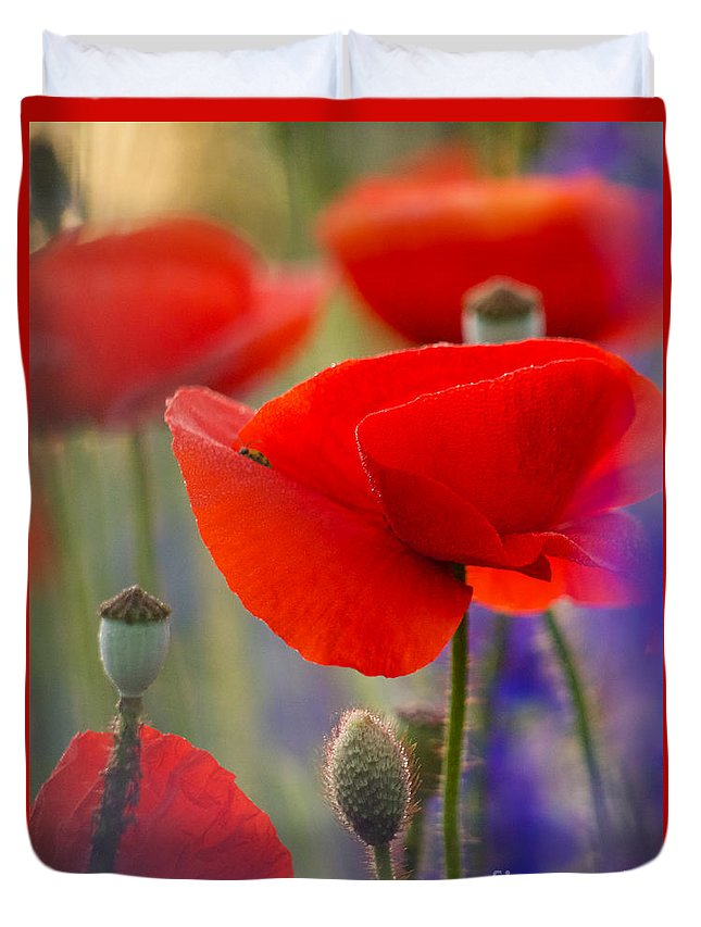 Poppies Duvet Cover featuring the photograph Red Poppies by Rachel Morrison