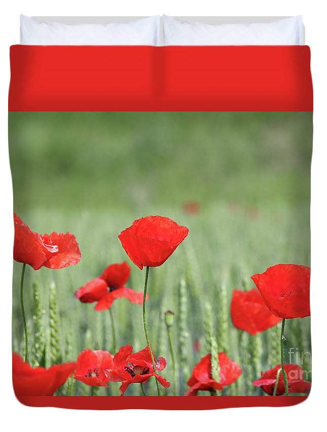 Wheat Duvet Cover featuring the photograph Red Poppy Flower And Green Wheat Nature Spring Scene by Goce Risteski