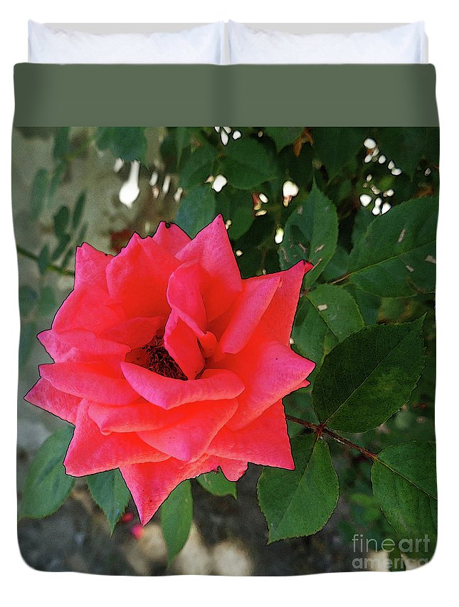Rose. Roses Duvet Cover featuring the photograph Pink Rose by Don Pedro DE GRACIA