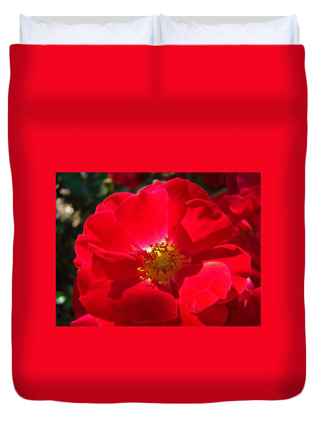 Rose Duvet Cover featuring the photograph Red Rose Art Print Sunlit Roses Botanical Giclee Baslee Troutman by Baslee Troutman