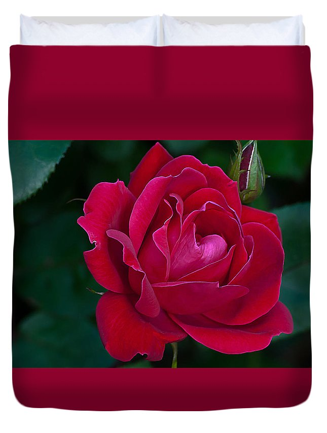 Floral Duvet Cover featuring the photograph Red Rose by Emerald Studio Photography