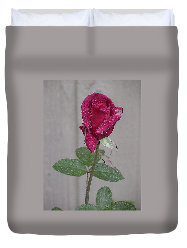 Northwest Duvet Cover featuring the photograph Red Rose In Rain by Shirley Heyn