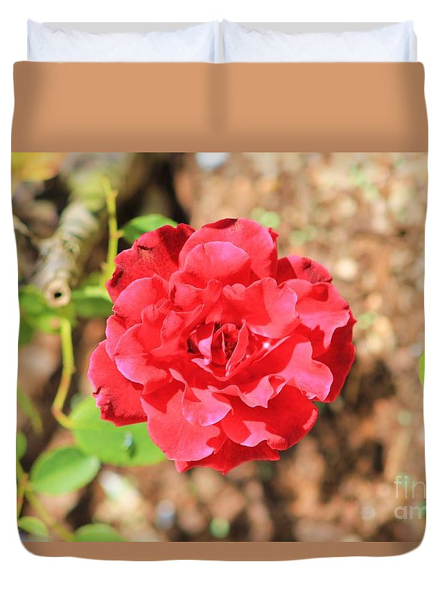 Rose Duvet Cover featuring the photograph Red Rose by Michelle Powell