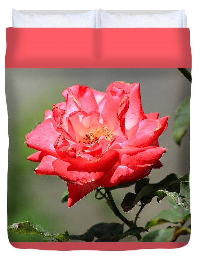 Rose Duvet Cover featuring the photograph Red Rose On A Bush by Robert Hamm