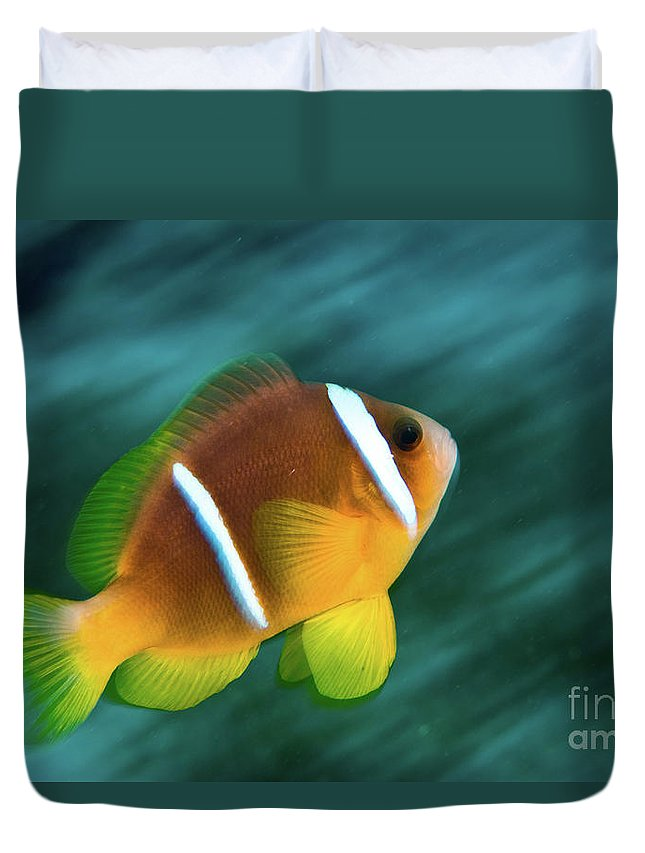 Red Sea Duvet Cover featuring the photograph Red Sea Clownfish by Hagai Nativ