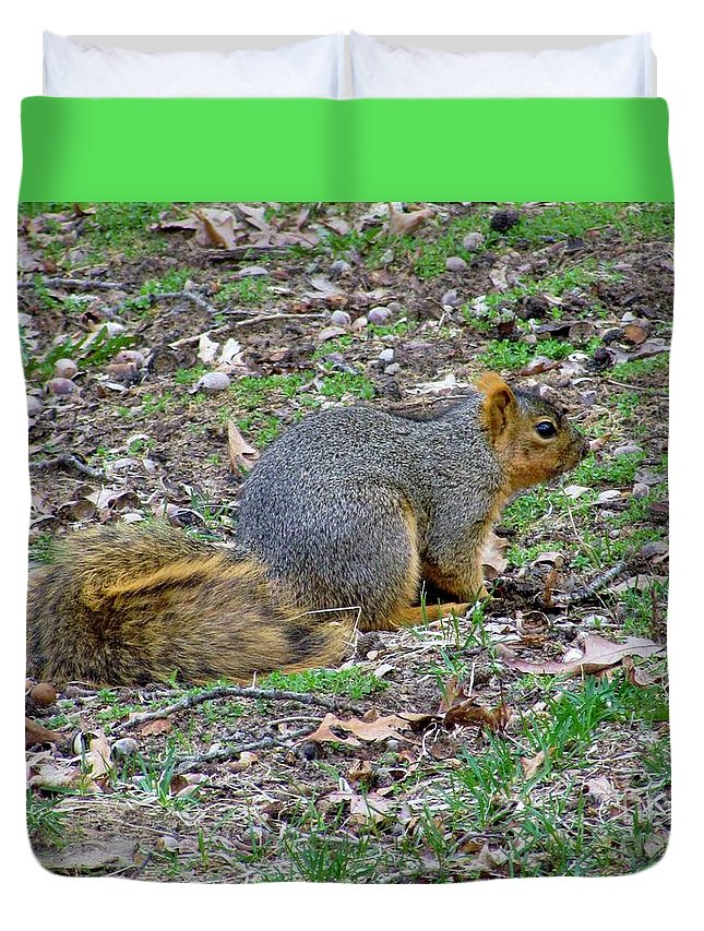 Red Squirrel Small Mammals Duvet Cover featuring the photograph Fox Squirrel 2 by James Seitzinger