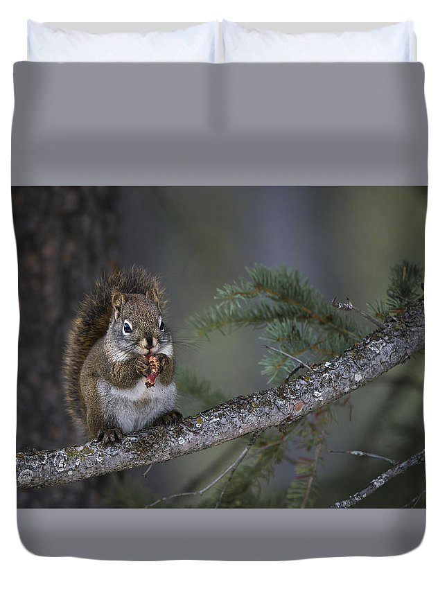 Red Duvet Cover featuring the photograph Red Squirrel Having Lunch by Bill Cubitt