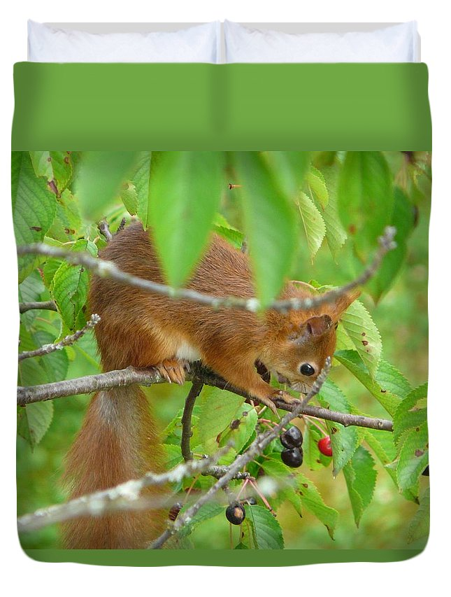 Animal Duvet Cover featuring the photograph Red Squirrel In The Cherry Tree by Valerie Ornstein
