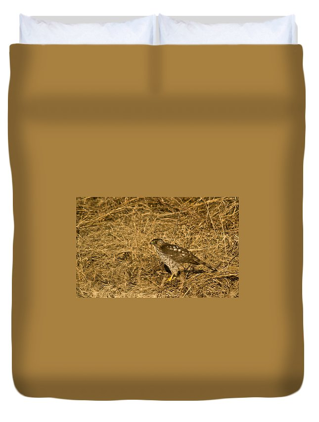Red Duvet Cover featuring the photograph Red Tail Hawk Walking by Douglas Barnett