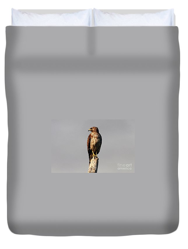 Red Tailed Hawk Duvet Cover featuring the photograph Red Tailed Hawk by David Lee Thompson