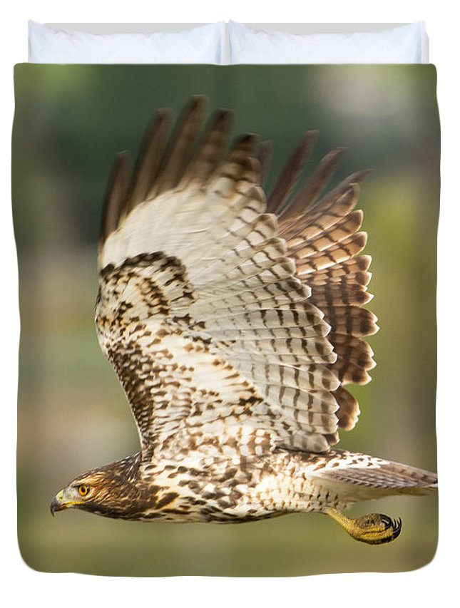 Bird Duvet Cover featuring the photograph Red Tailed Hawk Hunting by Dennis Hammer
