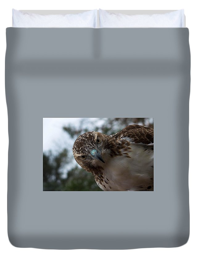 Hawk. Red Tailed Hawk Duvet Cover featuring the photograph Red Tailed Hawk by Nancy Comley