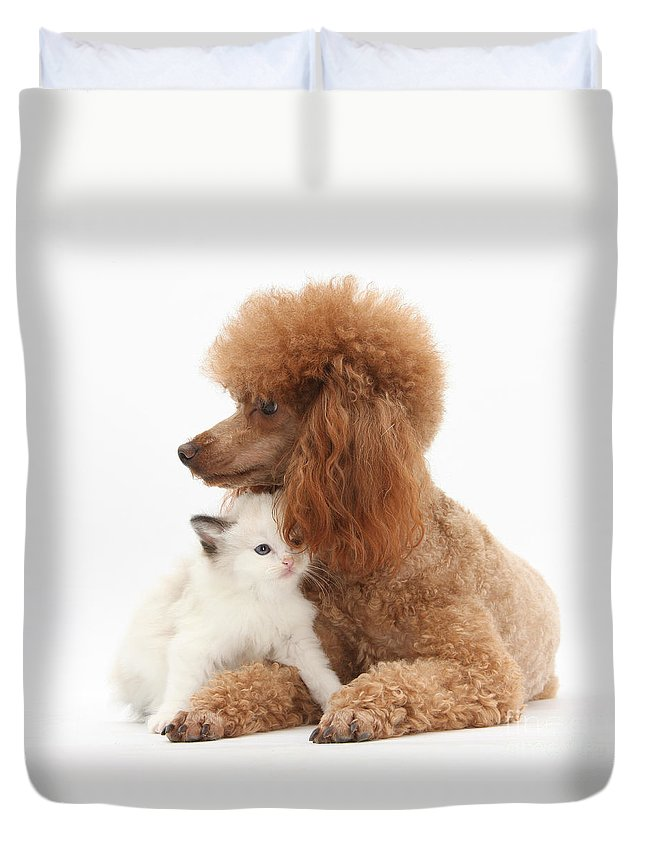 Red Toy Poodle And Kitten Duvet Cover