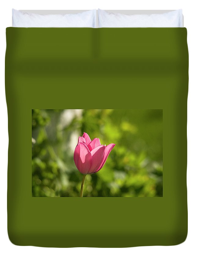 Tulip In The Garden Duvet Cover featuring the photograph Red Tulip Head by Cliff Norton