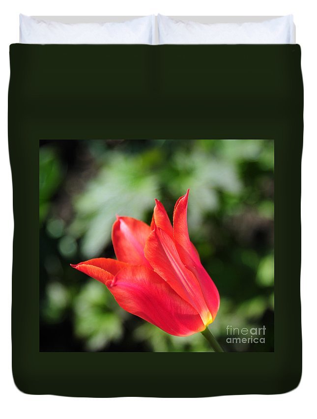 Red Duvet Cover featuring the photograph Red Tulip by Joe Ng