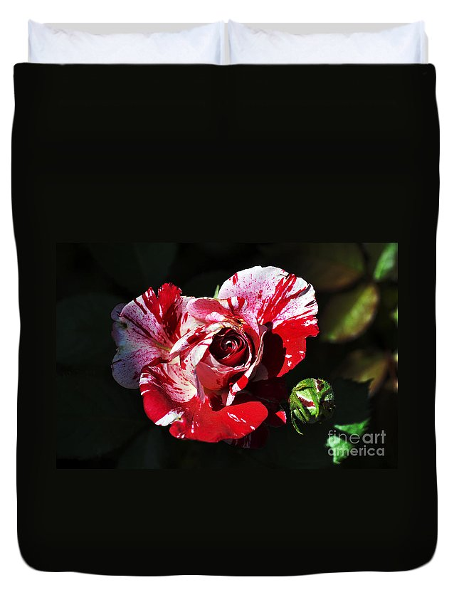 Clay Duvet Cover featuring the photograph Red Verigated Rose by Clayton Bruster